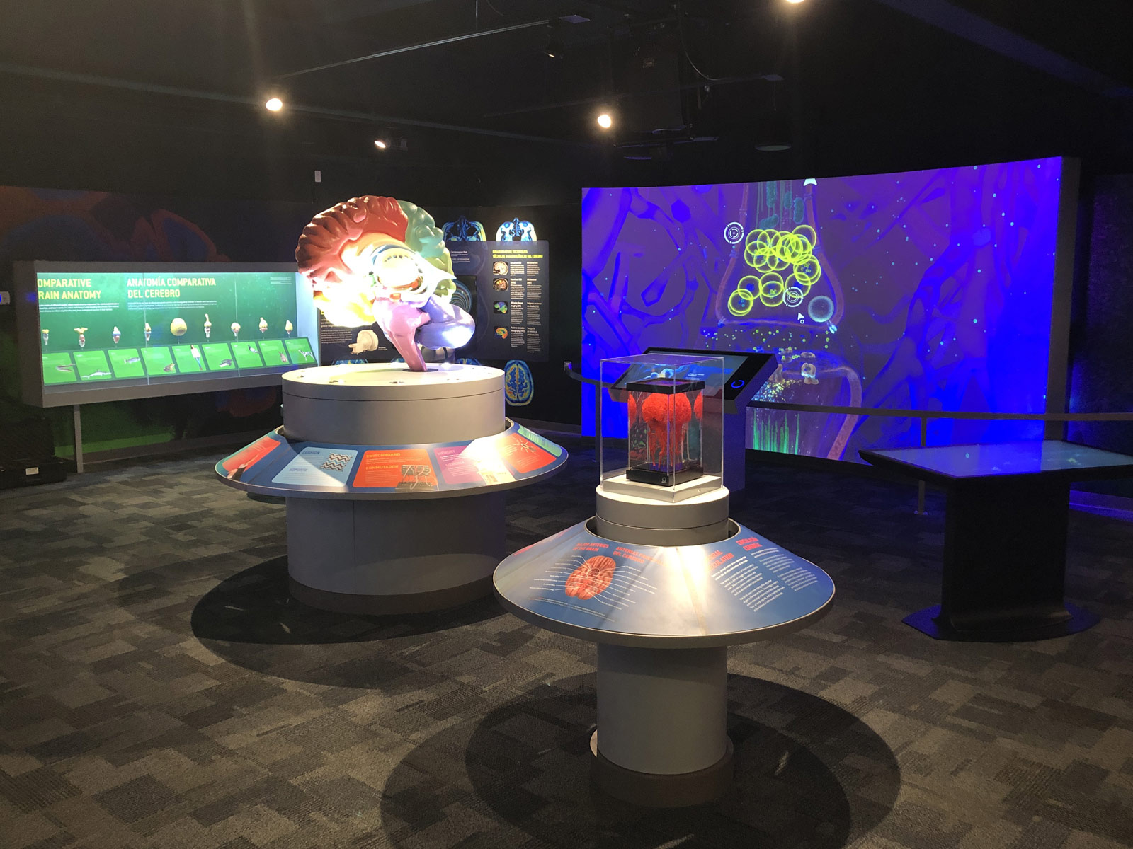 South Florida Science Center - Journey Though the Human Brain