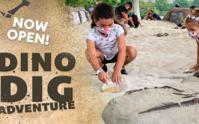 Dino Dig Adventure – Our Latest Museum Fabrication Project for Liberty Science Center
